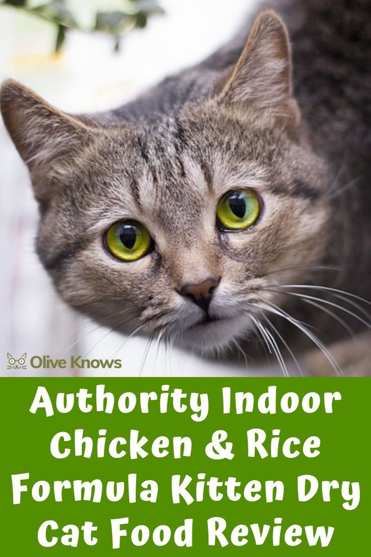 Authority Indoor Chicken Rice Formula Kitten Dry Cat Food Review Oliveknows Cat Food Reviews Cat Food Dry Cat Food