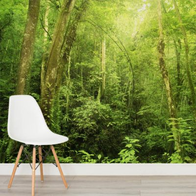 green-fern-woodland-scene-wall-mural-forest-square-1-wall-murals