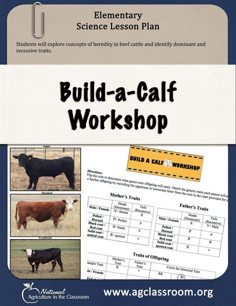 Lesson plan and activity sheet for students to discover traits of beef cattle and practice identifying dominant and recessive genetic traits.