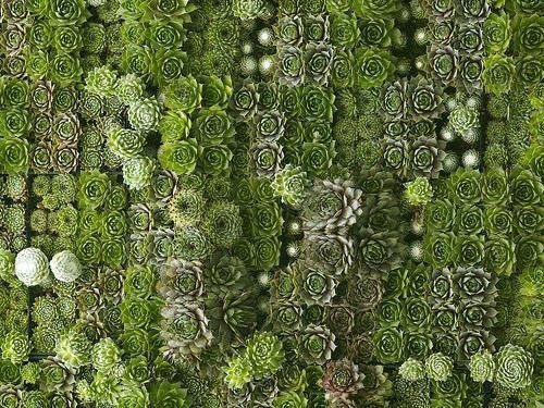 11 Best Green Roof Plant Ideas Images On Pinterest Green
