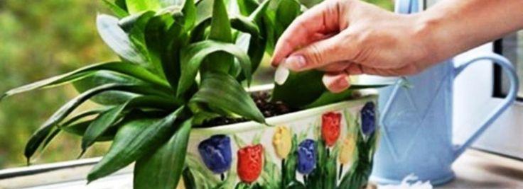 Növényápolás élesztővel