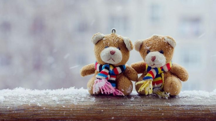 Teddy Bear Couple Beautiful Looks