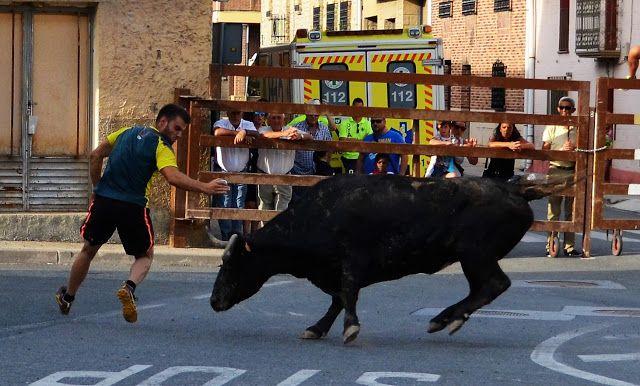 Santacara: Vacas Hermanos Ustarroz de Arguedas - (10)