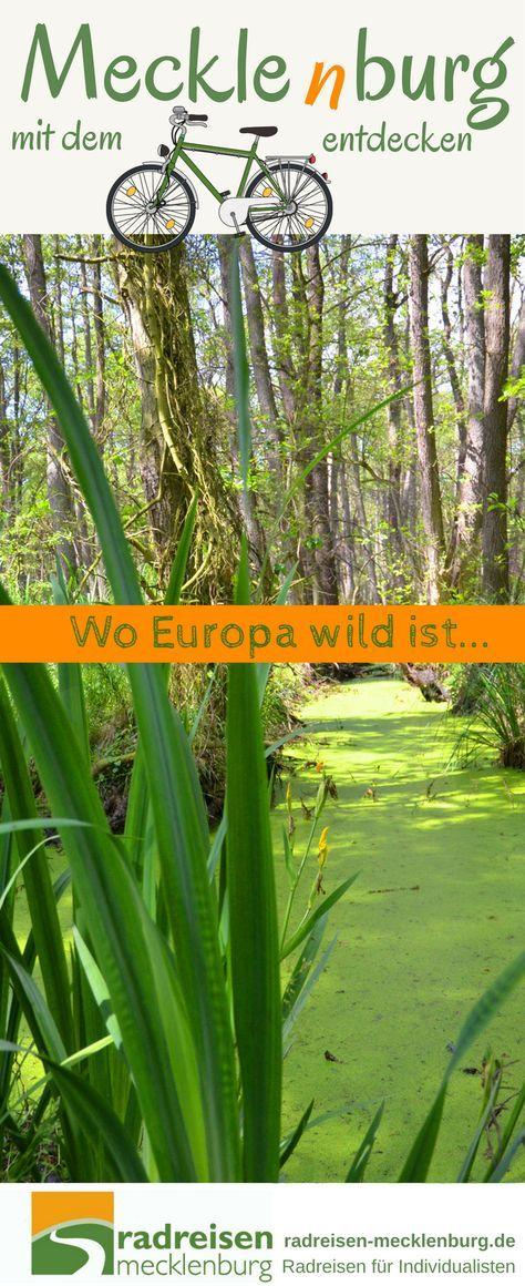 Ein Urwald mitten in Deutschland? Aber klar doch! In Mecklenburg gibt es gleich mehrere Urwälder, z.B. im #Müritz-Nationalpark. Unser #Urlaubstipp für eine #Radreise nach #Mecklenburg.