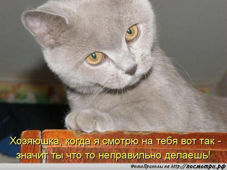 Открытку коробочка, животные картинки с надписями онлайн программа