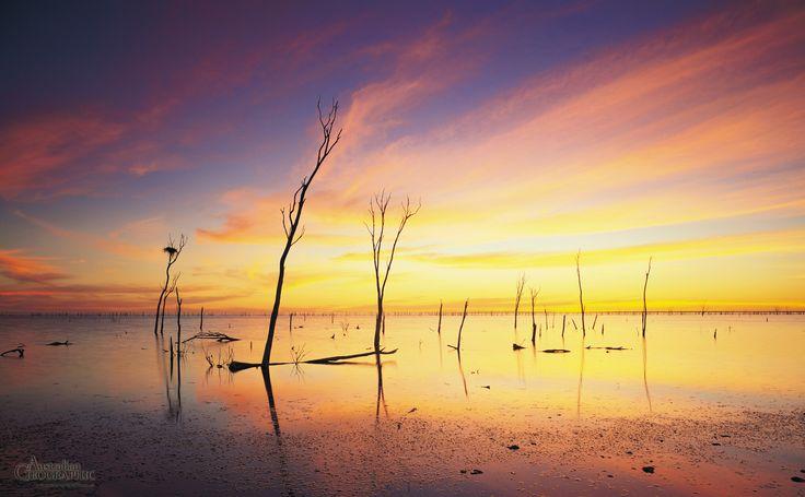 Lake Gregory, Tanami Desert