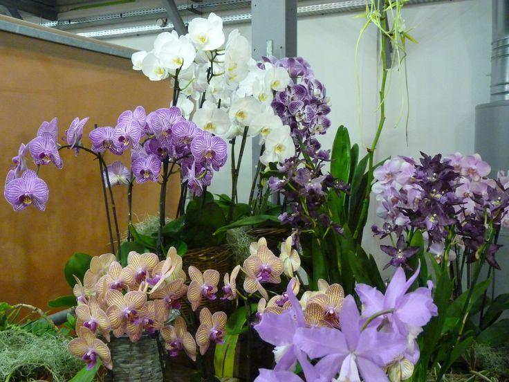 spekulum sex orchidee frankfurt