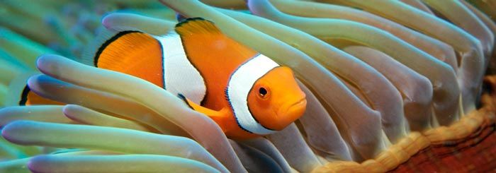 Travel NQ's, North Queensland's dedicated travel website explains why snorkeling the Great Barrier Reef looks different to what you may have seen on TV #greatbarrierreef #cairnstourism #elitecairns #findingnemo