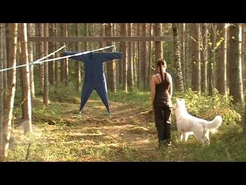 Berger Blanc Suisse | Swiss White Shepherd | Character test Horsebo Supreme 2