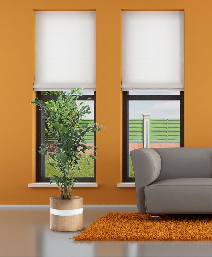 buy office plants office foliage fishtail palm buy indoor plants buy