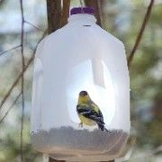 18 best images about george 39 s plastic bottle recycling for How to make birdhouses out of plastic bottles