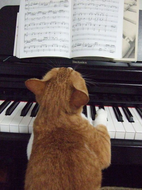 #cats Practice makes perfect.