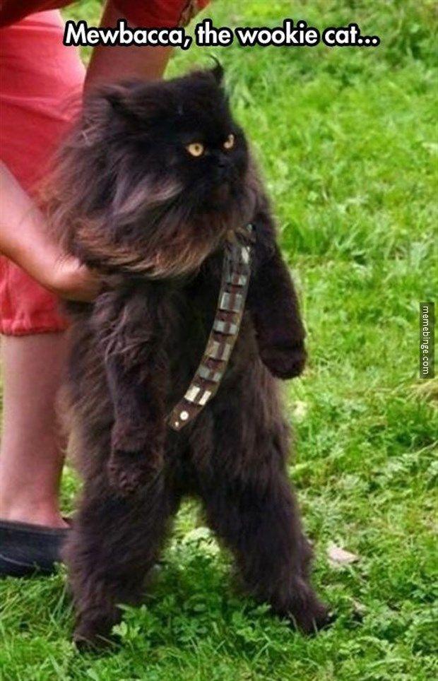 The wookie cat! http://mbinge.co/1tviozR