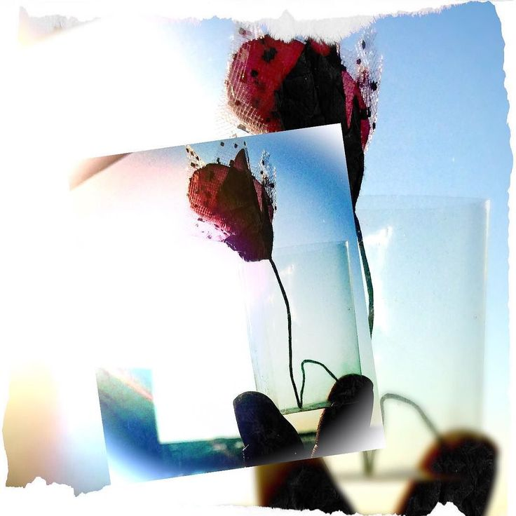 Experimental - a paper rose in a transparent cellophane paper box held against bright sun light. editing using Pixlr. Www.couchflyer.com #experiment #rose #doubleexposure #edit #art #mobile #instadaily #instagood