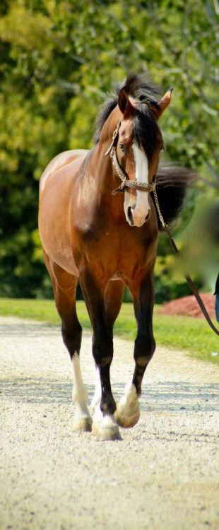 Beautiful horses - from coffee pearls and poetry