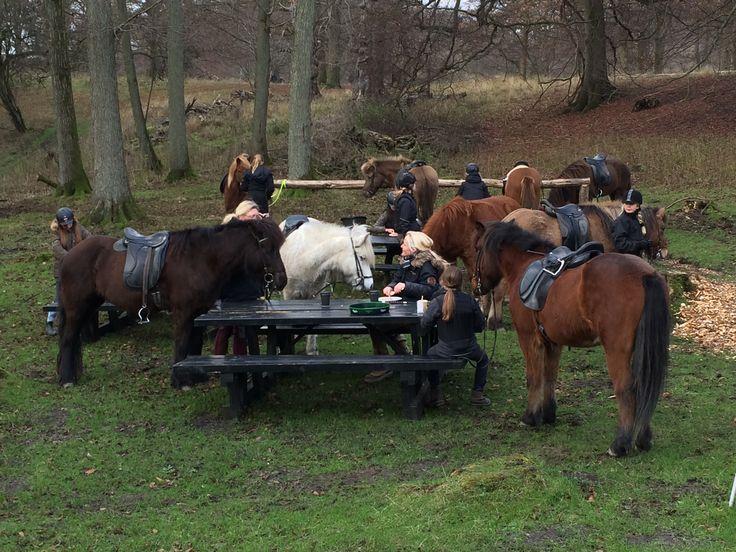 tag endelig hesten med - vi elsker dyr
