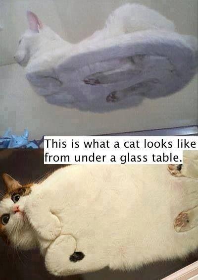 Cat on a table...hahaha!