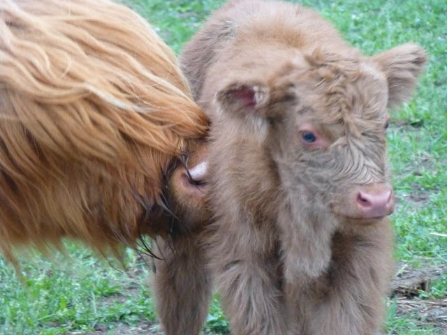 An other newborn and his mother.