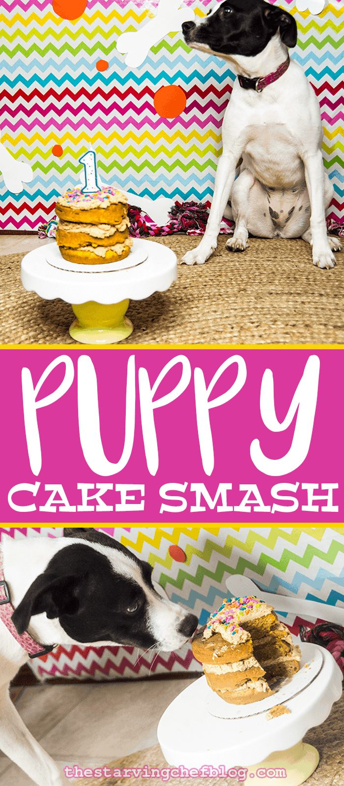 The Starving Chef | Puppy Cake Smash! It's Luna's first birthday - so we threw a birthday for our dog!