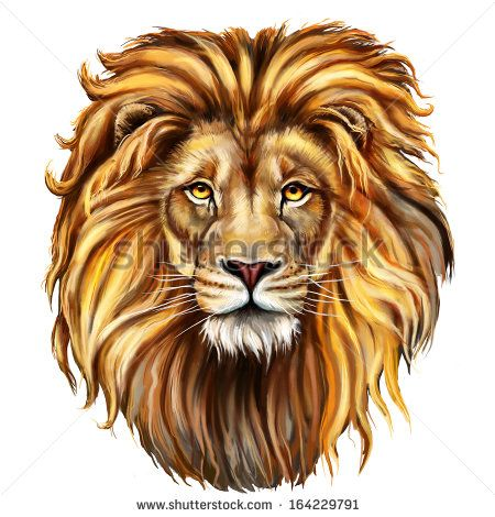 Lion Head Digital Painting/ Lion Head In Front Stock Photo ...