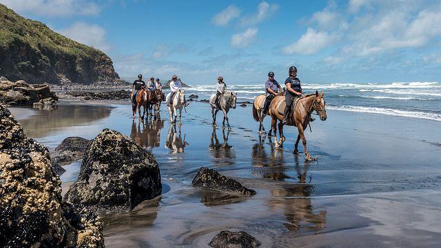 Horse n Around Waikato New Zealand