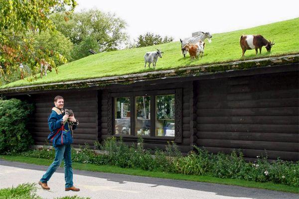 tetti verdi ristorante