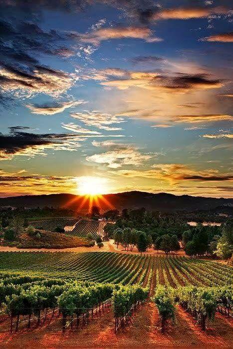 Coucher de soleil sur les vignes. Grandiose!