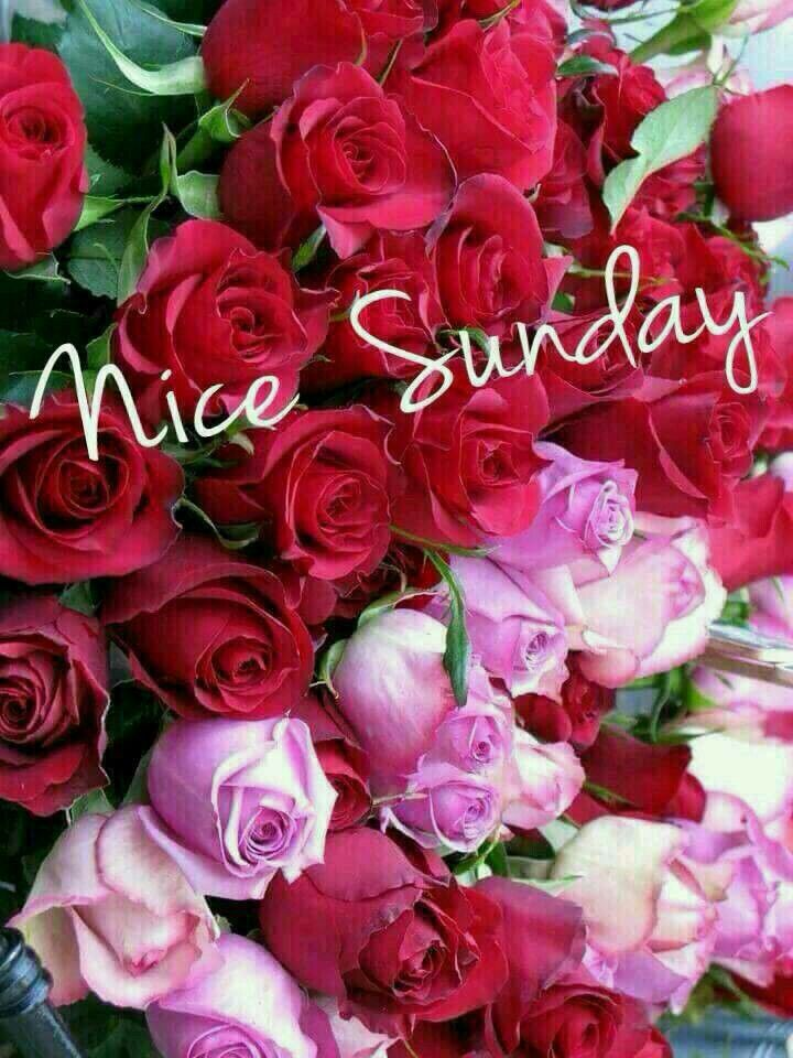 Good Morning Sunday Flowers Images : Best images about everyday on pinterest
