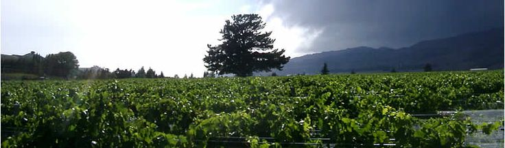 Cromwell focused on Pinot noir - try a wine called the blondie