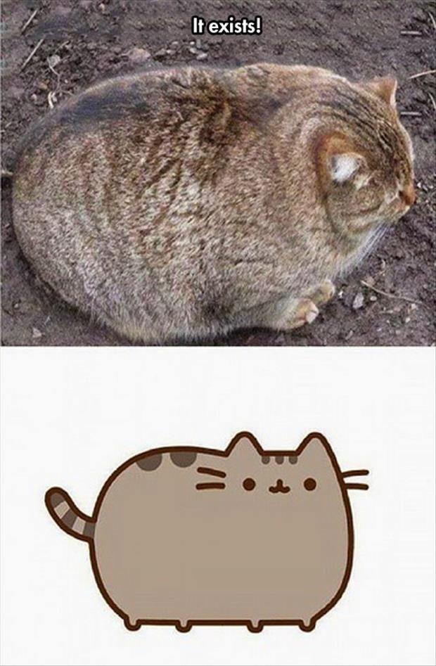 www zazzle com kittypretttgifts Omg  quotes  cat  meme  humour  cute  lolcats womens    max  fiberglassblack sail  air  funny   cats         humor