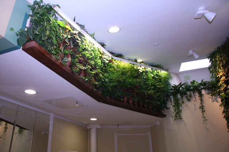 A plant wall under the ceiling