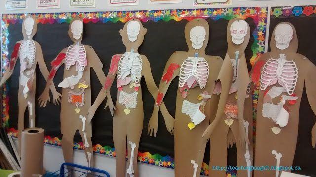 Human Organ Systems for Ontario Grade 5 science (Blog Post)