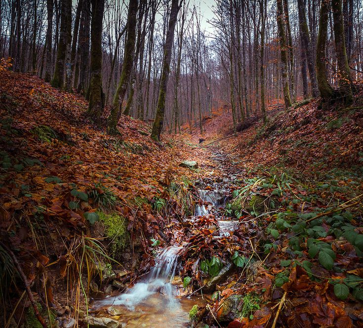 Small stream flowing in the forest