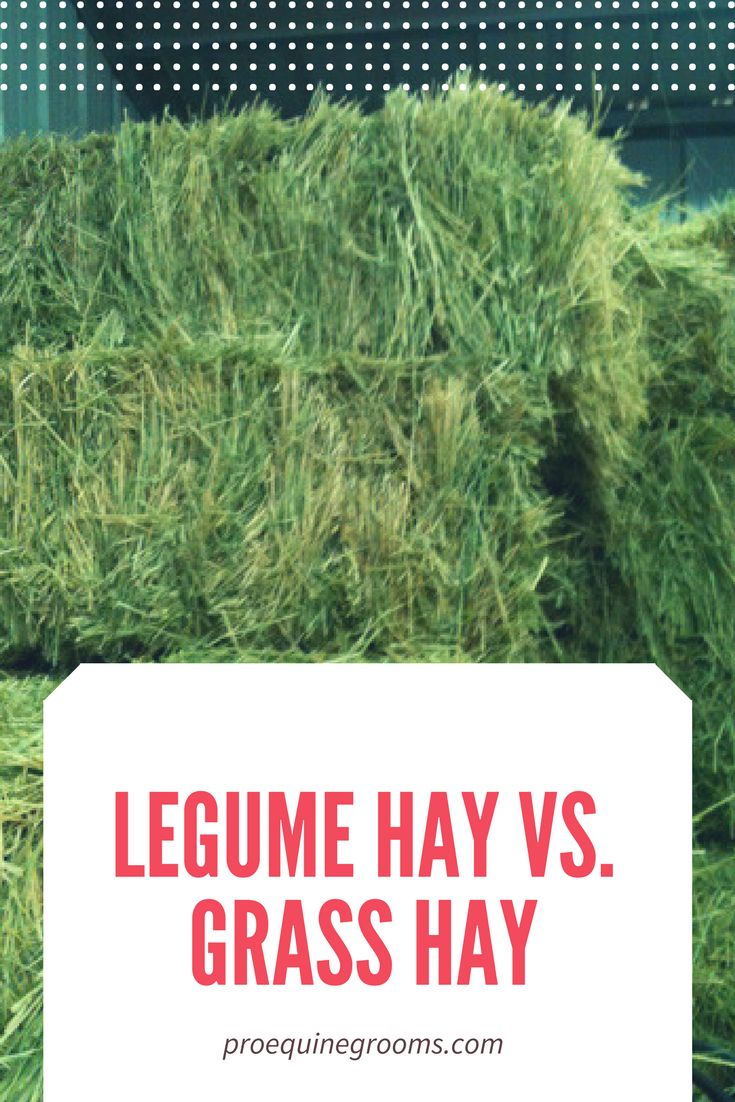 Legume hay and grass hay - the differences.