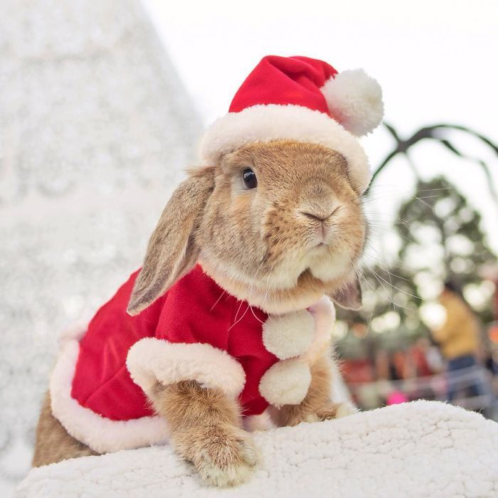 """Felix, Shy's rabbit and the inspiration to her children's novels, """"Letters from Felix"""" and others."""