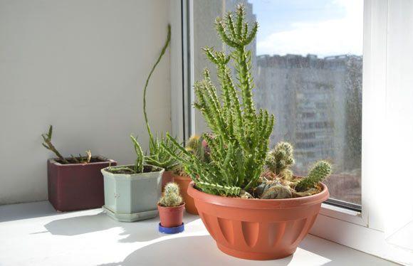 Conheça as plantas que podem melhorar o ar da casa - ZAP em Casa