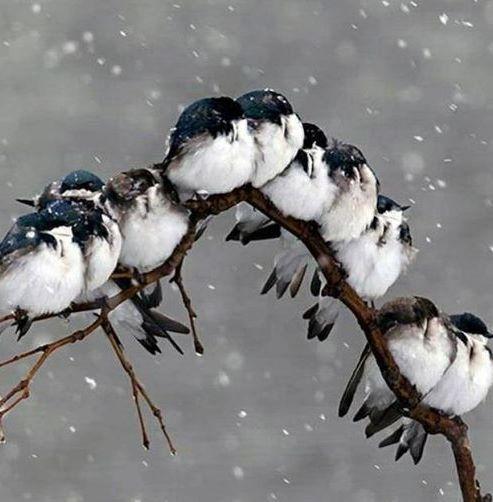 A Snowy Song