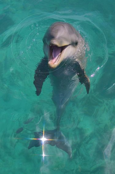Best dog collar here dolphin baby - Google Search visit us