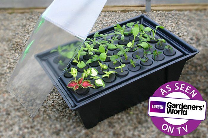 http://www.greenhousesensation.co.uk/media/catalog/product/cache/1/image/700x700/6dcdb3bec3b7d3d8fa2d31ce95a0090e/h/y/hydropod_misting_cuttings_propagator_rooting_1.jpg