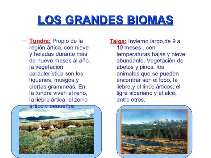 Cuadros Comparativos De Biomas Cuadro Comparativo Biomas Bioma De La Selva Bioma Del Desierto