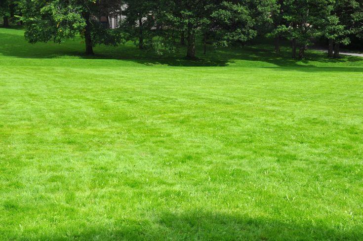 Ikke noe føles bedre som å gå med nakne føtter på et fløyelsmykt grønt teppe og samtidig snuse inn lukten av nyklippet gress. Drømmen er en grønn og frodig plen som holder seg flott gjennom hele sommeren.