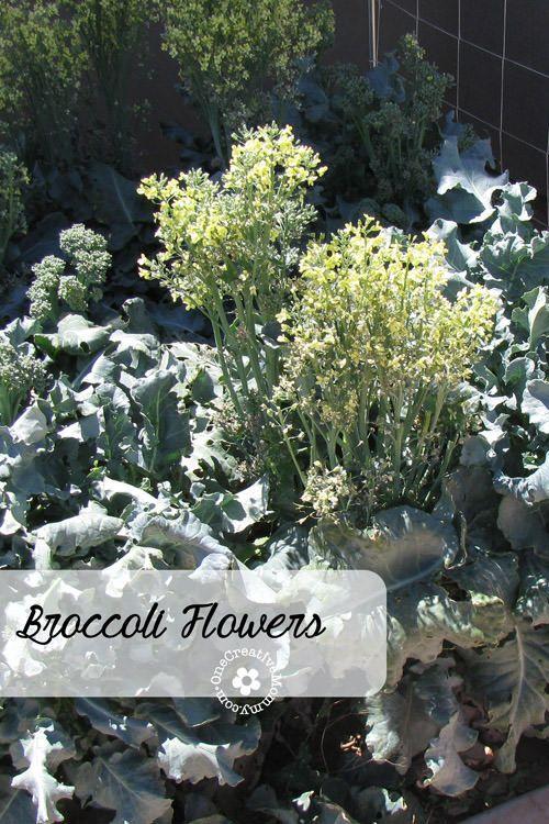Broccoli Flower Salad