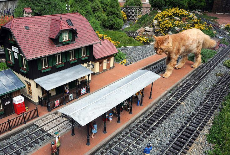 I always wanted dh to do a garden railway: Big Cat, Cats, Animals, Funny, Humor, Photo, Kitty, Model Railroad