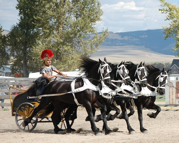 Gerard Paagman driving four of his #Friesians