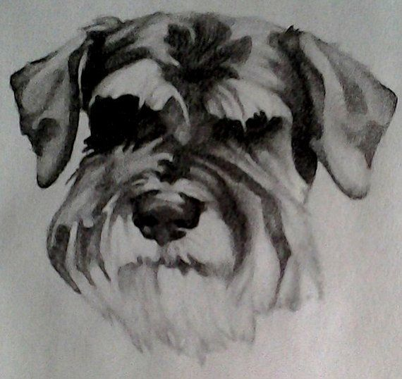 Schnauzer Drawing Easy: 28 Best Art Lessons: Shapes Images On Pinterest