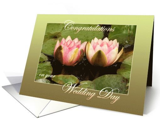 Two pink water lilies close together - Green Border -...by Steppeland