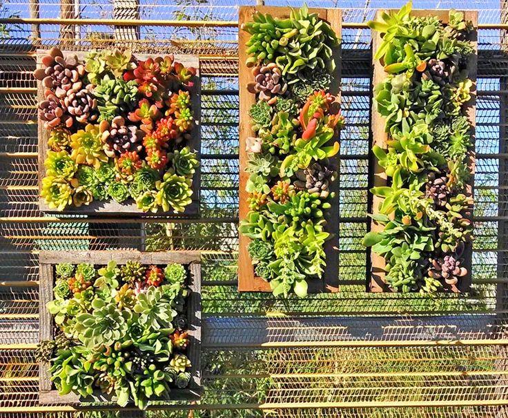 Cactus Jungle Succulent Wall Panels Backyard Fence