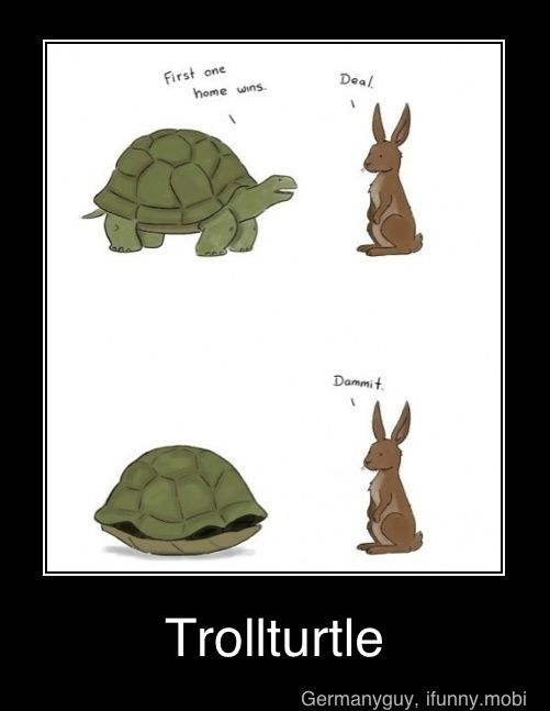 .: Tortoise, Giggle, Funny Stuff, Humor, Funnies, Turtles, Homes, Smile