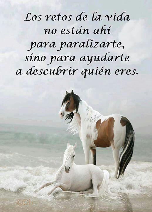 Horses.♥