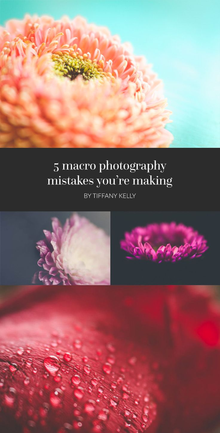 Many people get frustrated when they first try to learn macro but the reality is that it takes practice and you just have to stick with it, like all types of photography. Let's chat about some of the biggest mistakes you could make in your macro journey.